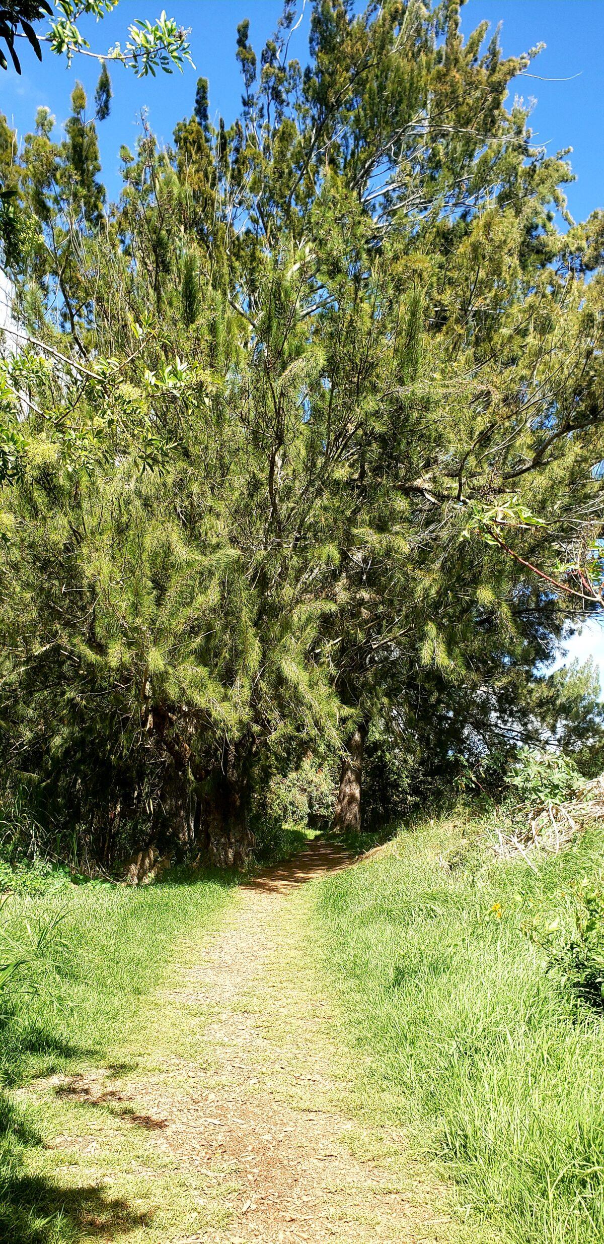 The #BW4H Series, Part 4:  Connecting Waimea to Culture & Nature Through Ke Ala Kahawai O Waimea